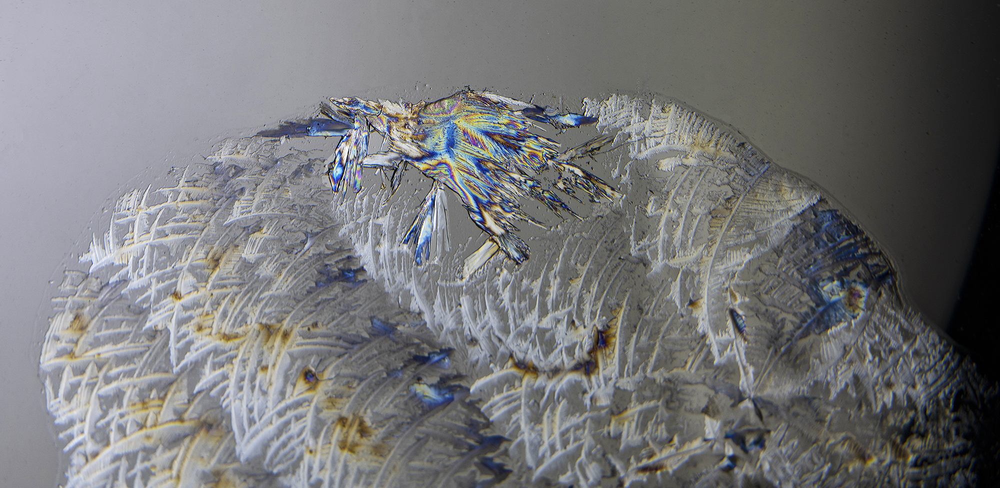 INDIAN FEATHERS